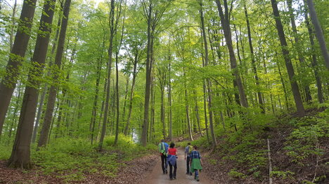 ACW2018-11 Wandern Retzbach Wald