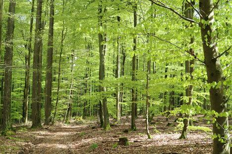 17_Meditative Waldwanderung_Julian Bruhn