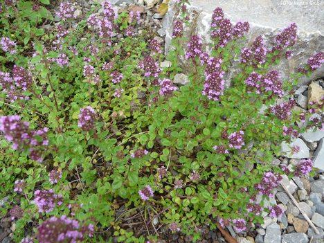 Duftpflanzen und Kräuter